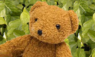 Bear bigger with ivy