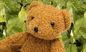 Bear bigger with ivy