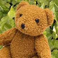 cropped-bear-with-ivy