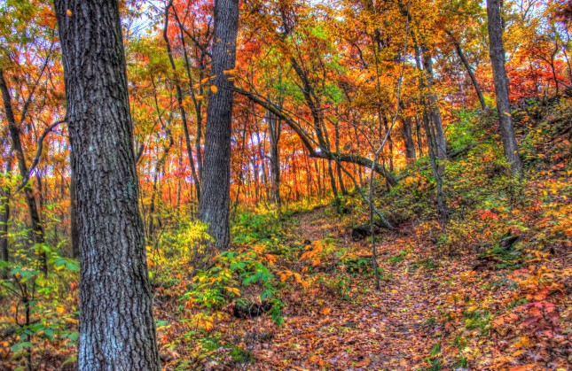hiking_path_in_autumn_in_southern_wisconsin_591589