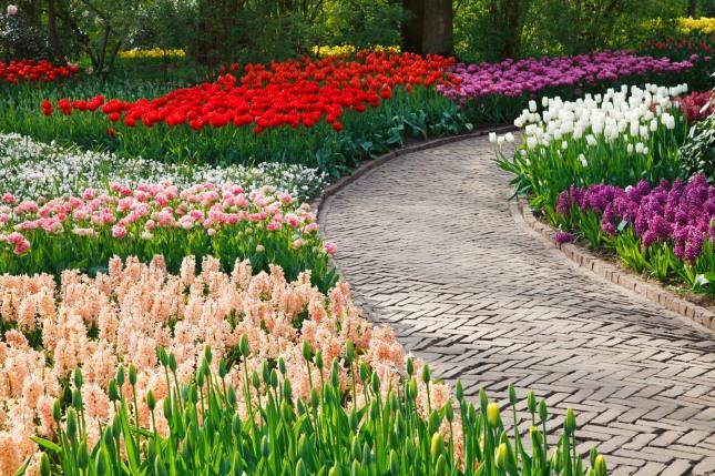 path_among_flowers_196012