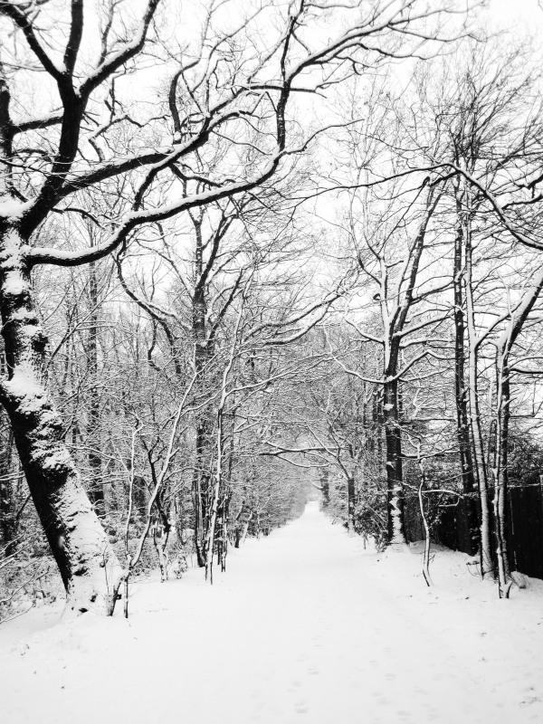 snowy_road_193732