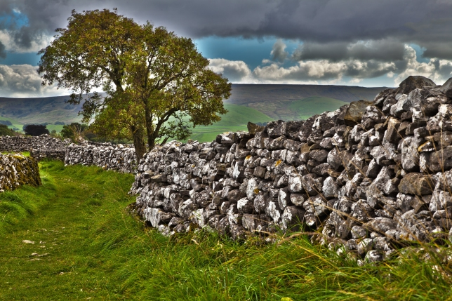 tree_and_stone_wall_191724