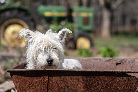 Dog in sandbox erda-estremera-1167545-unsplash