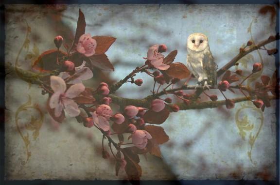 OWL spring_513365